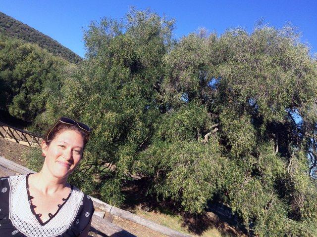 post img jenn smiling olive trees