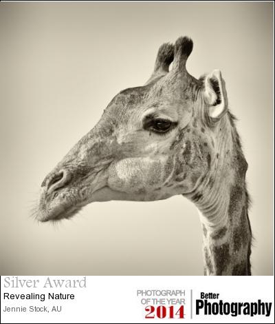 Giraffe portrait - Silver and 45th place