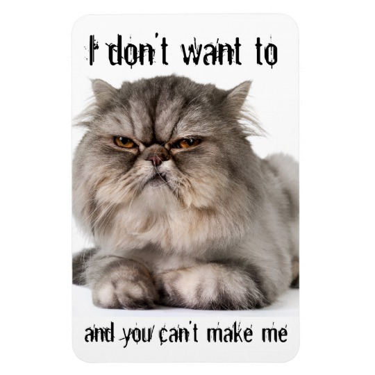cranky_kitty_flexible_magnet_i_dont_want_to_magnet-r06d02d6e103b4374a0d1b3a08d96188a_am0uf_8byvr_540