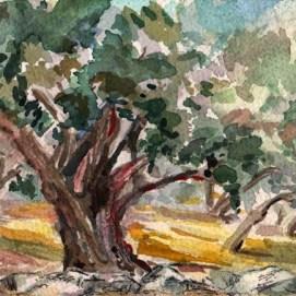hahamongna-park-oak-2
