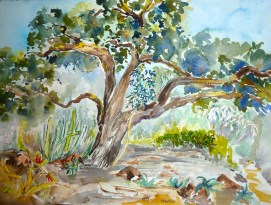 Huntington-Gardens---Canary-Oak-300dpi,-by-Jennifer-Bentson,-Watercolor