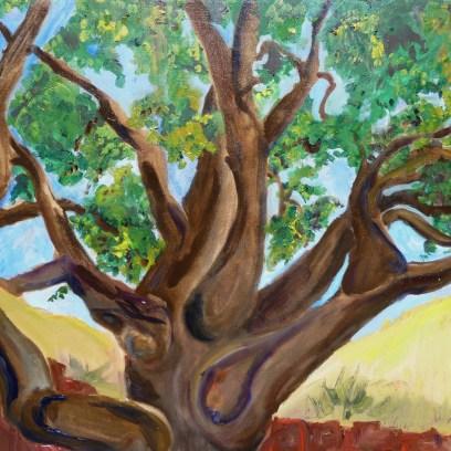 san-rafael-oak