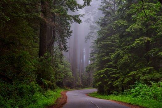 redwood-national-park-california-hdr-landscape-163585