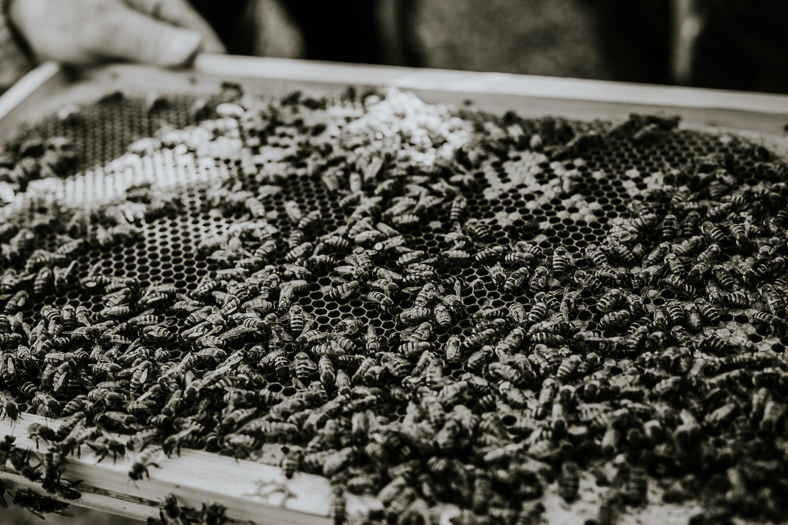 bd-bees-18