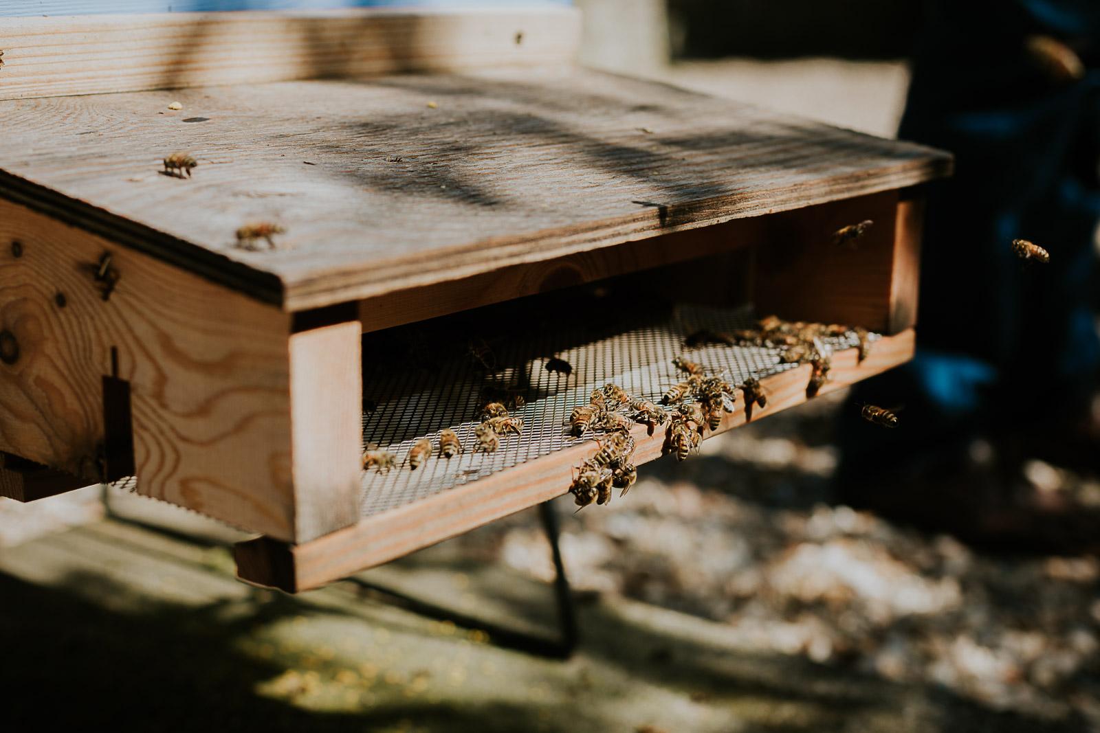 bd-bees-3