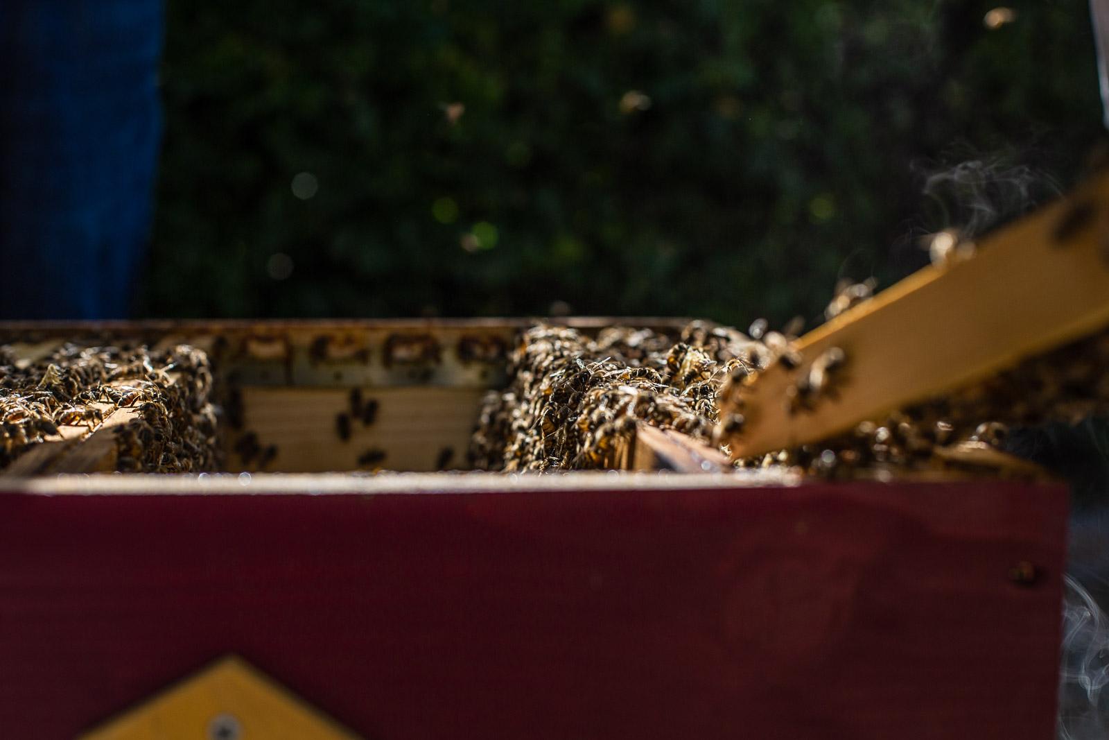 bd-bees-30