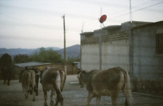 mexico_web11