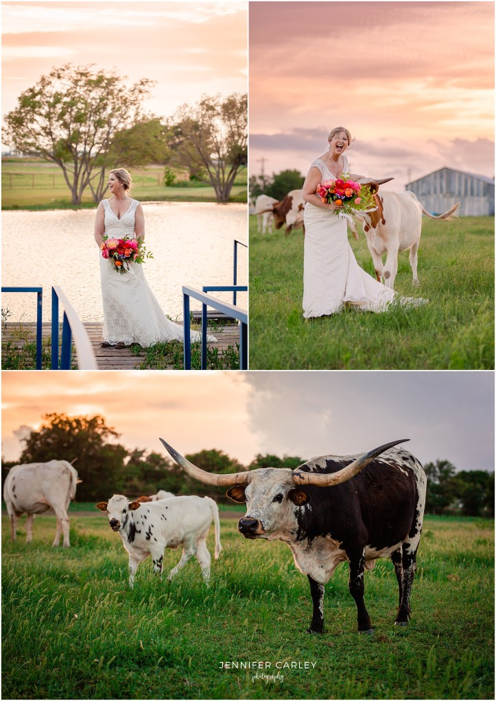 longhorn cattle, Wedding Dress, Lace Wedding dress, Bridal Portraits Texas Ranch, Texas Ranch Wedding, Cowboy Wedding, Western Bride, Lucky Spur Ranch, Justin Wedding, Flower Mound Wedding