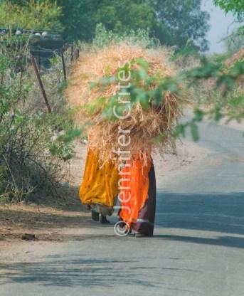 Ranthambhore 426