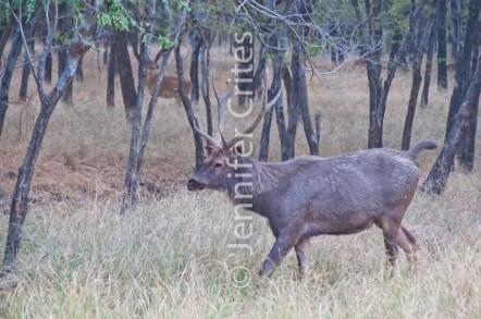 deer 374