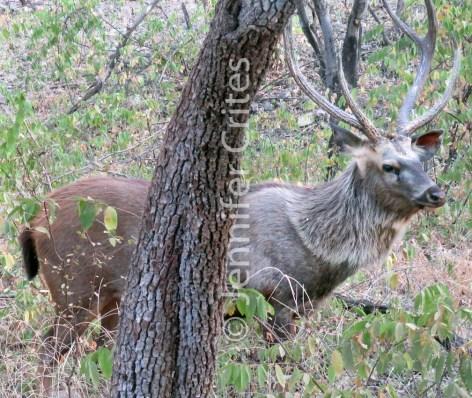 Ranthambhore preserve 572