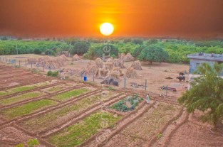Ranthambhore sunset over farm 460