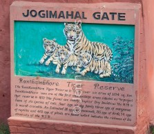 Ranthambhore tiger preserve 324