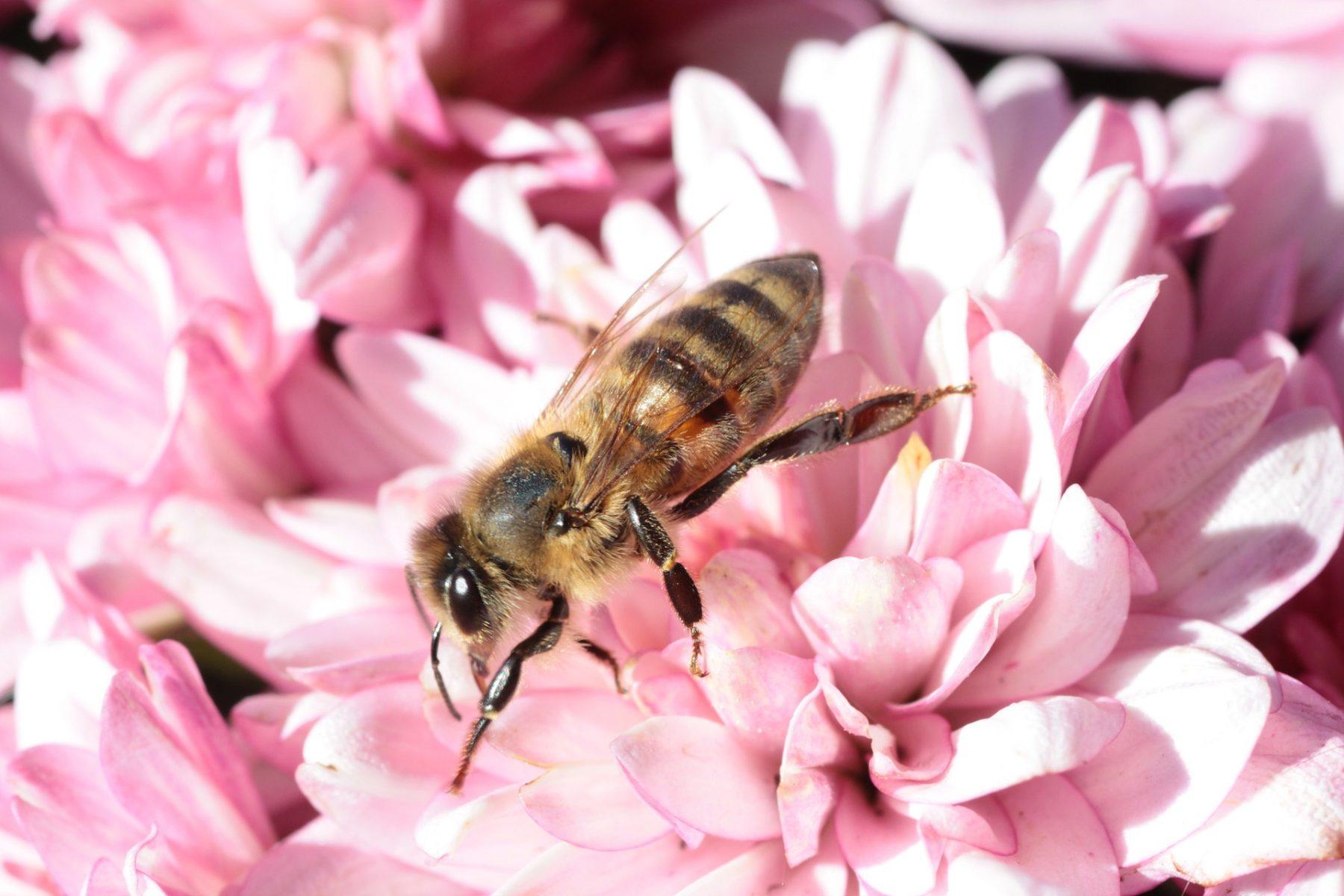 Buzz Bee