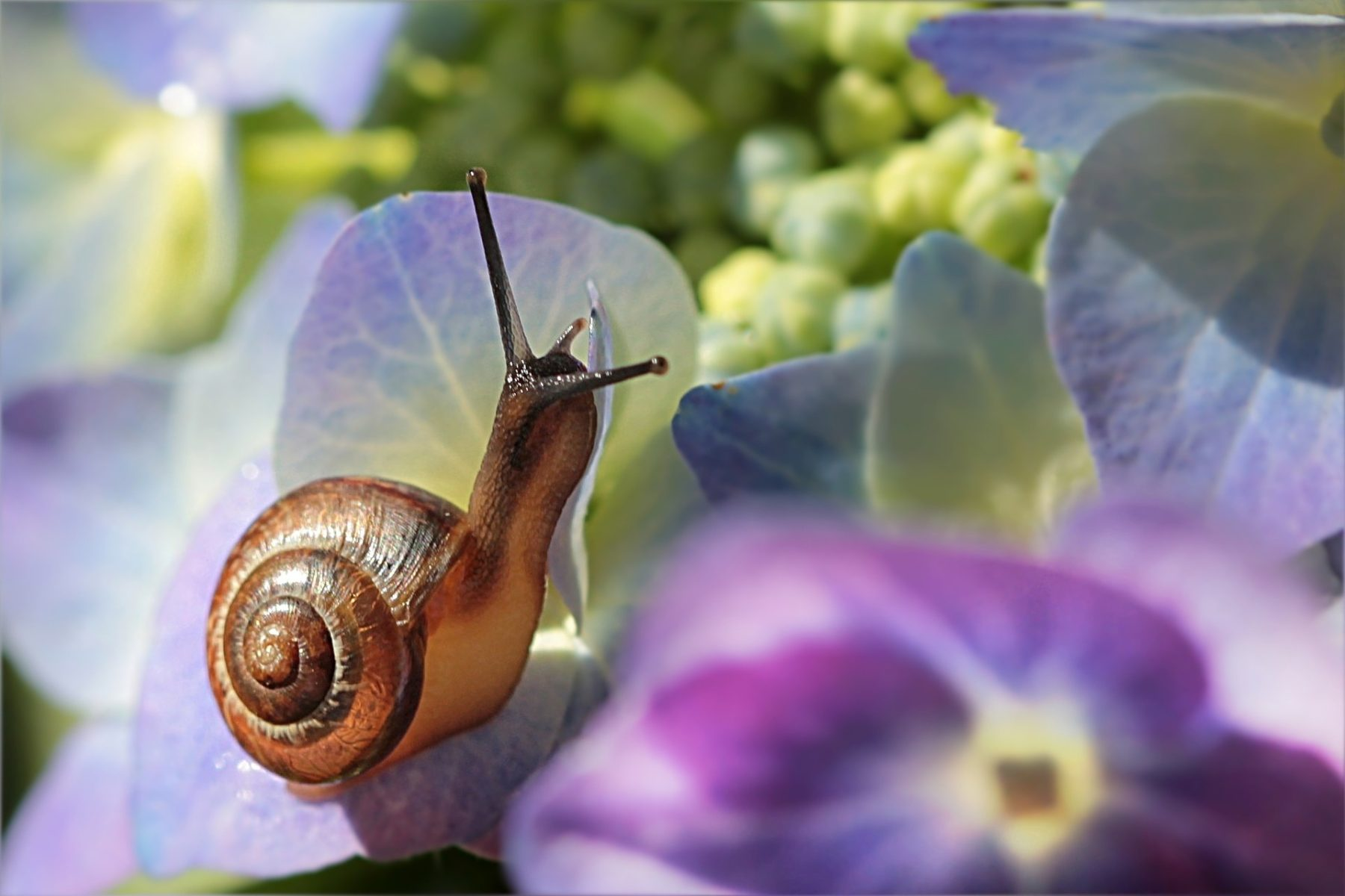 Slow Reading Snail