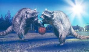 Basketball Raccoons