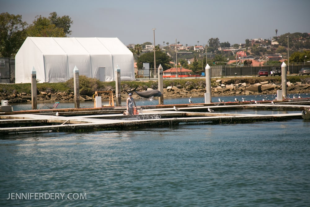 marriage-proposal-boat-photos-san-diego-9574