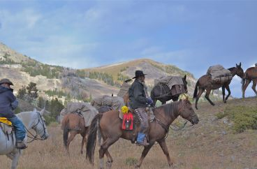 mules and horses in Yellowstone