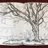 Trees & Me