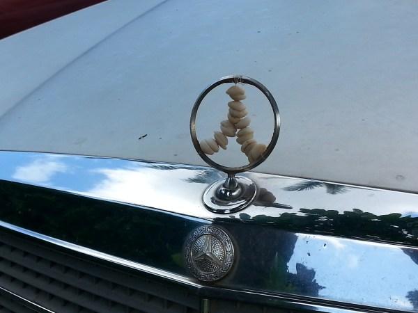 puka shell Mercedes hood ornament
