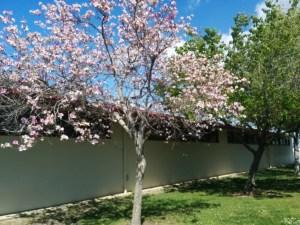 spring foliage