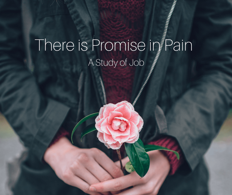 There is Promise in Pain (Week Fifteen)