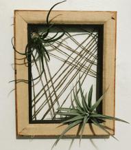Empty frame + twine + air plants