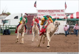Chander, Arizona, USA. 11th March, 2016. Camel racers at the 28th Annual Chandler Ostrich Festival. The yearly festival runs for three days and draws large crowds. © Jennifer Mack/Alamy Live News
