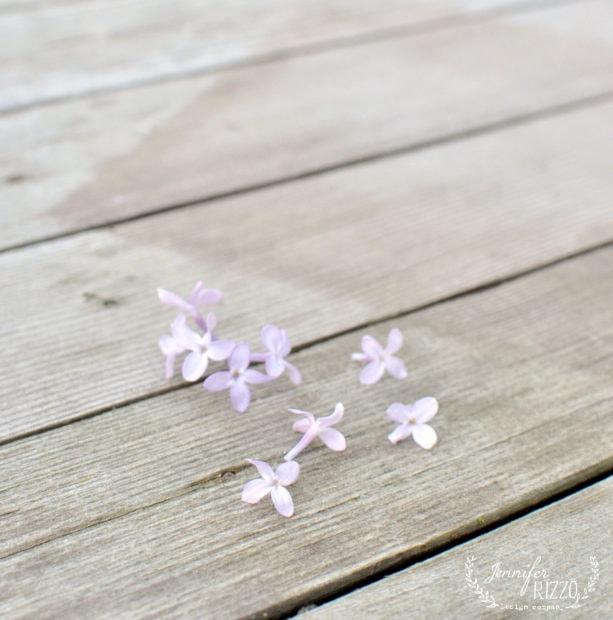 Single purple lilac blossoms