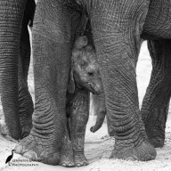 20160303_Elephants-2