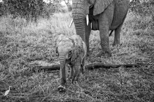 20180313_Elephants1