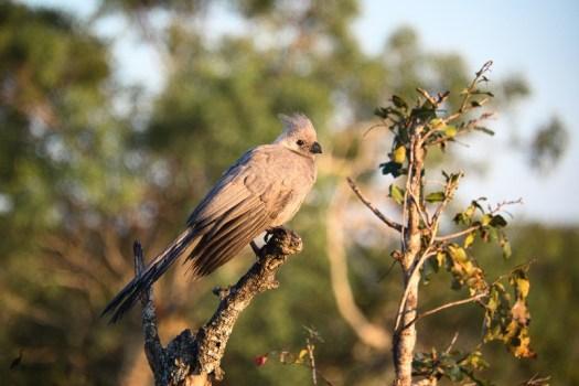 goawaybird