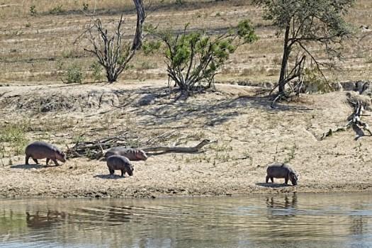 11am - Hippos