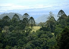 Bunya Mountains 1
