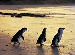 Penguin Parade 4