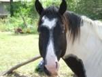 Jenn J Mcleod Horse 2