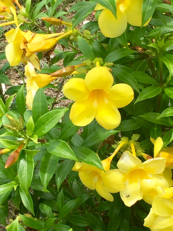PR yellow flowers