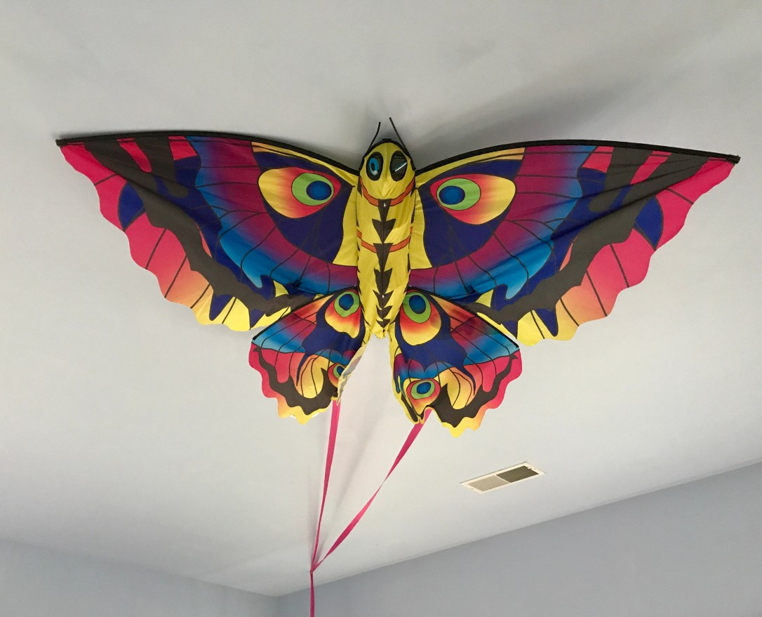 Colins butterfly