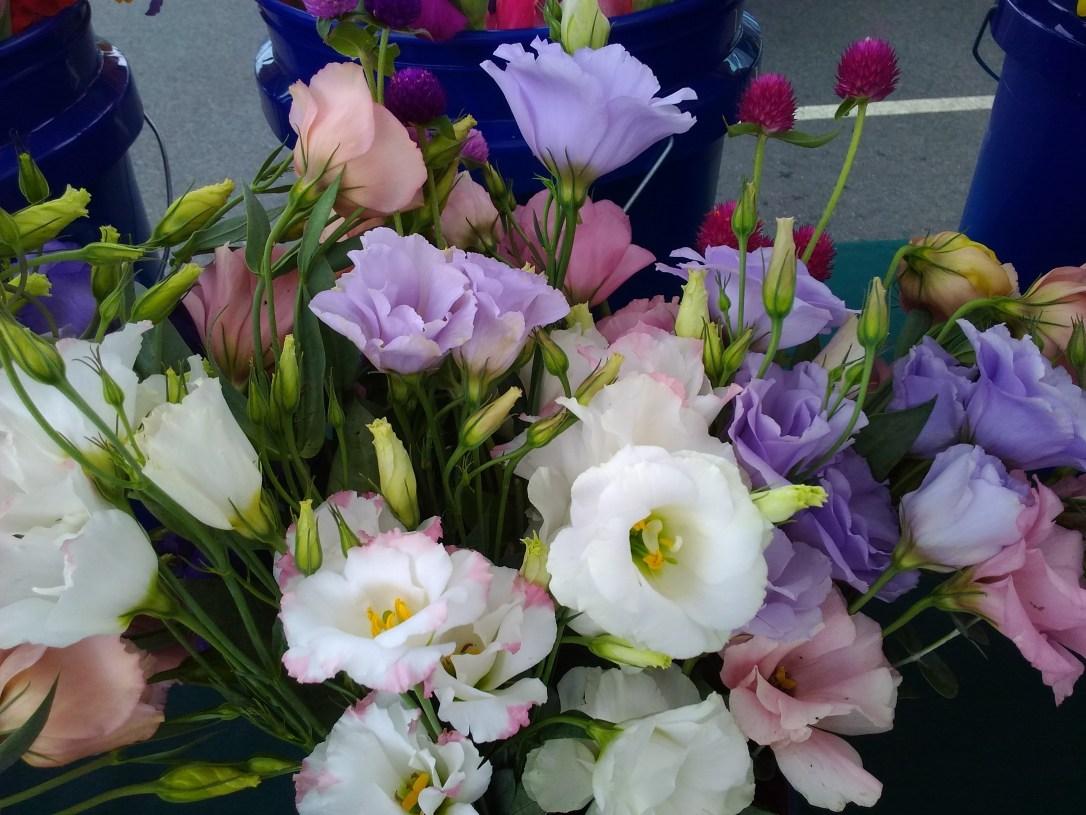 catharpin flower assortment 3