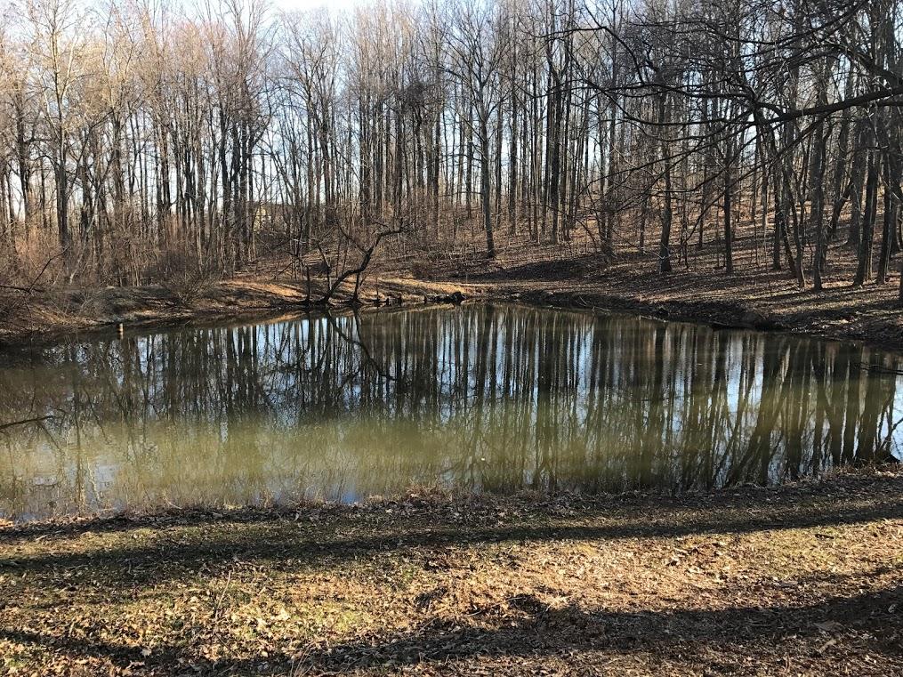 Joubran Farm pond