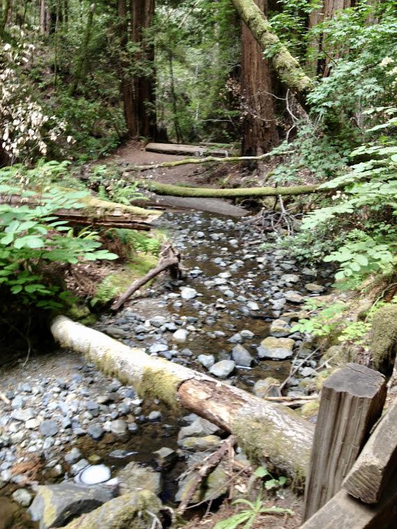 john muir creek