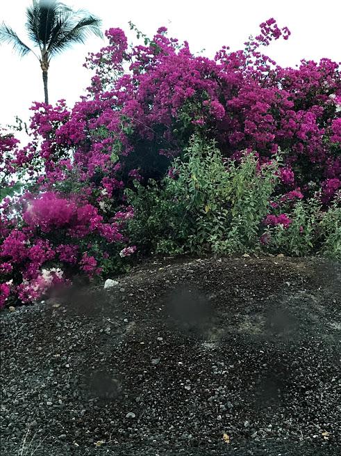 Kona lava rock and flowers