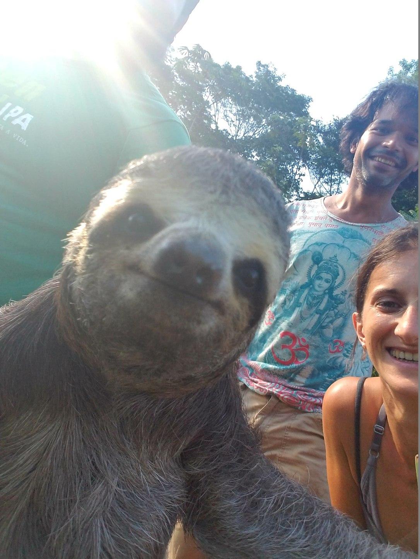 River-Sea sloth selfie