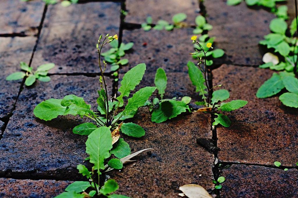 weeds growing in cracks