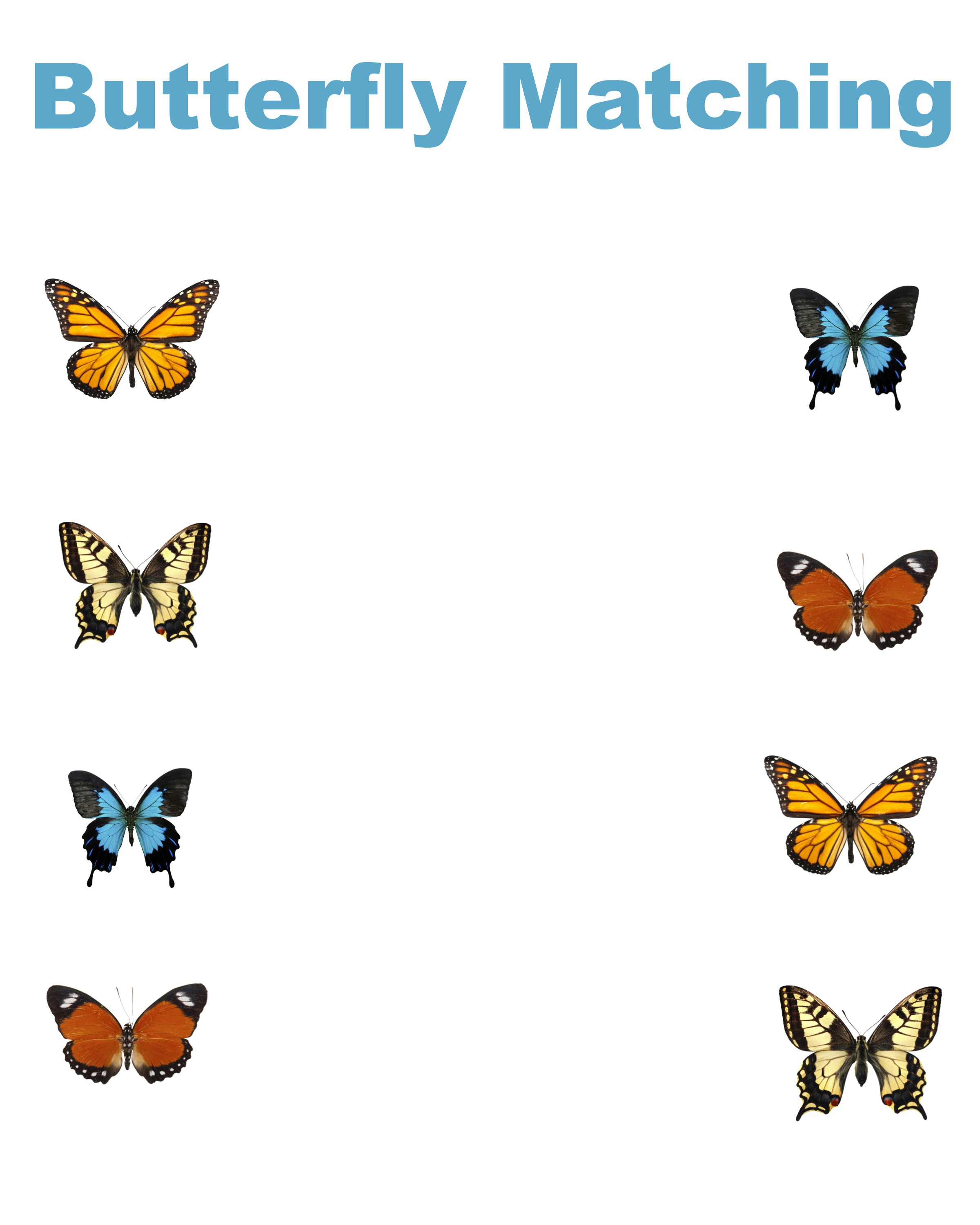 Butterfly Pollination Worksheet