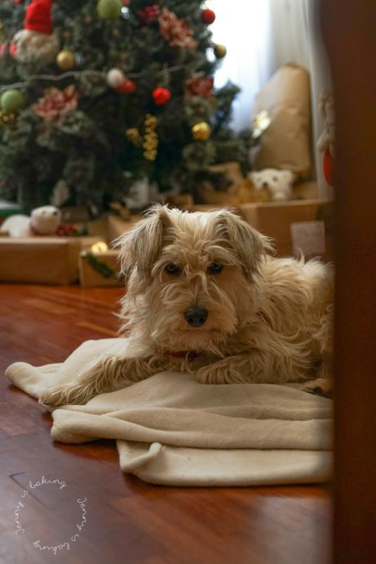 Hund vor dem Weihnachtsbaum