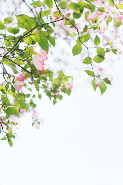 Pink flowers and green leaves. Photo by TOMOKO UJI on Unsplash