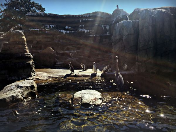 Penguins - A visit to the Woodland Park Zoo