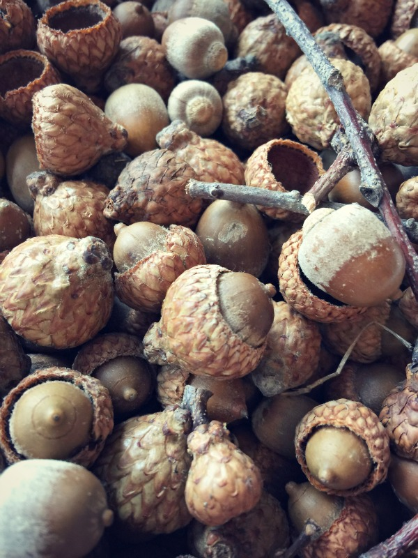 acorns via @jennyonthespot
