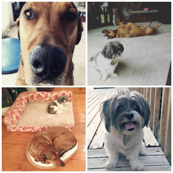 national love your pet day - my pets
